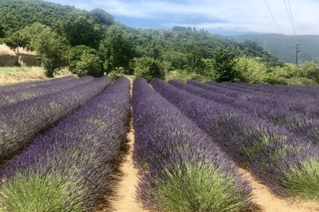 Provence, 21.6. - 30.6. 2019